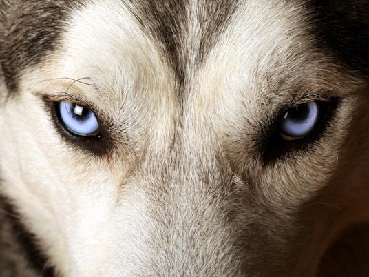Verso il PPTour di Kranjska Gora – Ivan Garofalo avverte: attenti al lupo!
