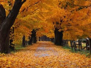 autunno_3351